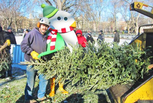 Christmas tree recycling queens park : It s in queens january th terrace